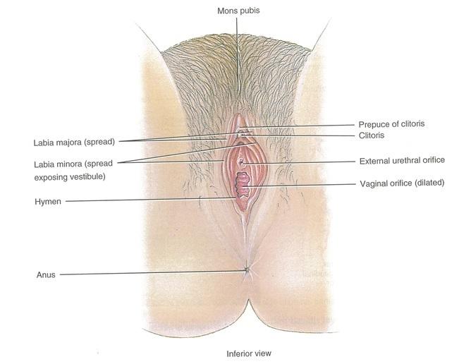 Vaginoplastie - Ingustare Vagin | Dr. Maximilian Muntean