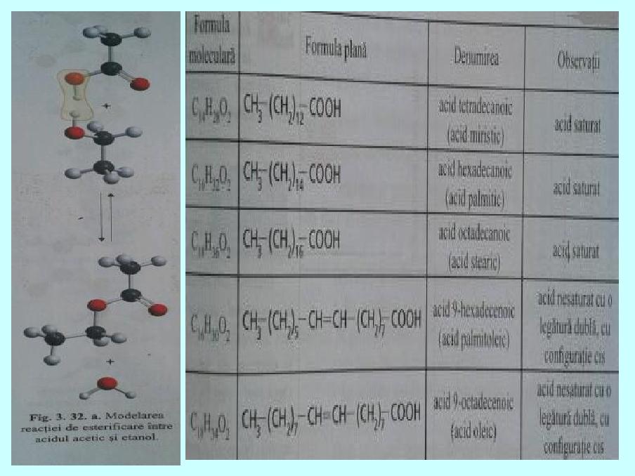 ecuatia chimica de ardere a grasimilor