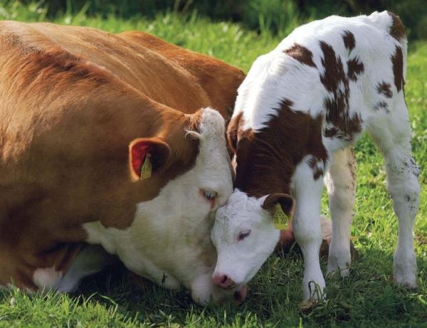 Brânză de vaci fund pentru a pierde în greutate