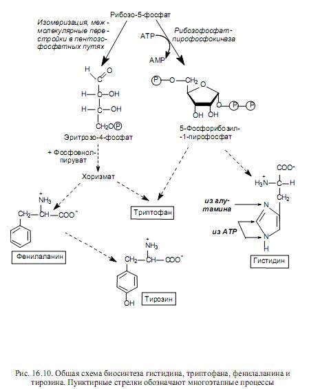 scăderea în greutate a adenosil- 1 metioninei