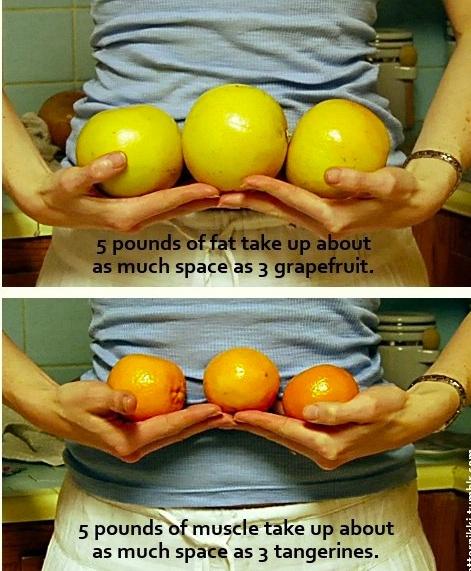 este pierderea în greutate pierdere de grăsime