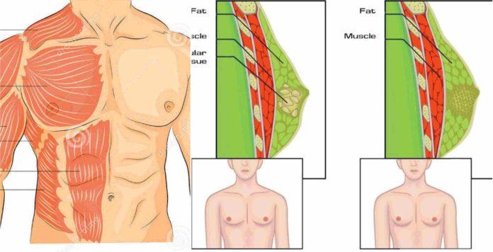 cum să pierzi eficient grăsimea corporală)