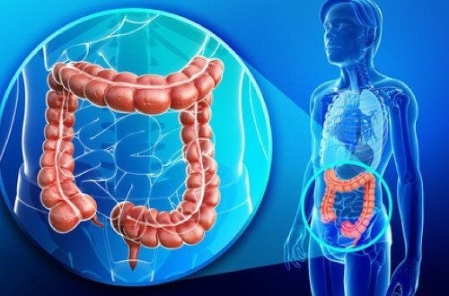 cum să-ți pierzi intestinul gras)