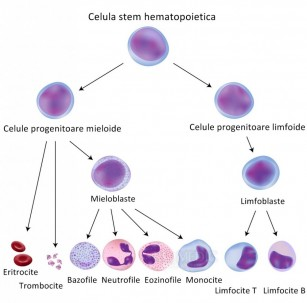 Transplant de celule stem - tot ce trebuie sa stii despre tratament