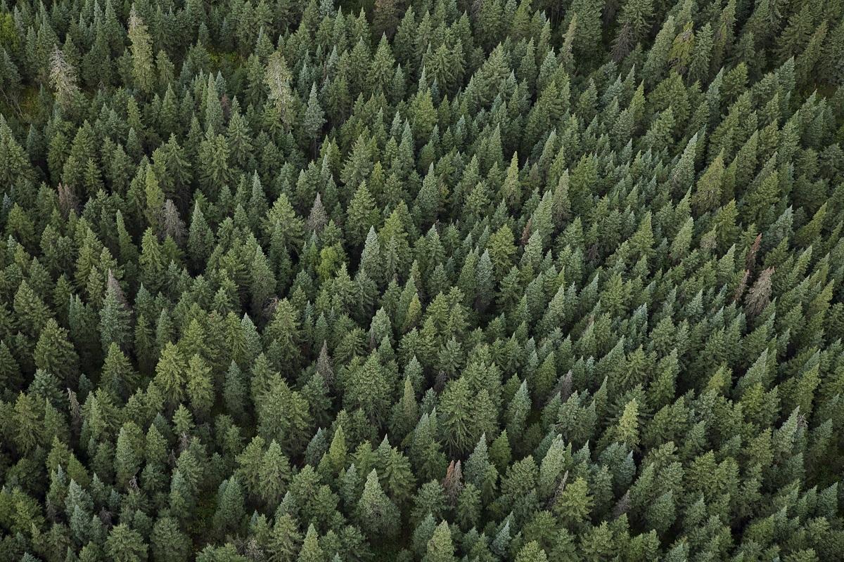 pădurea pierde în greutate