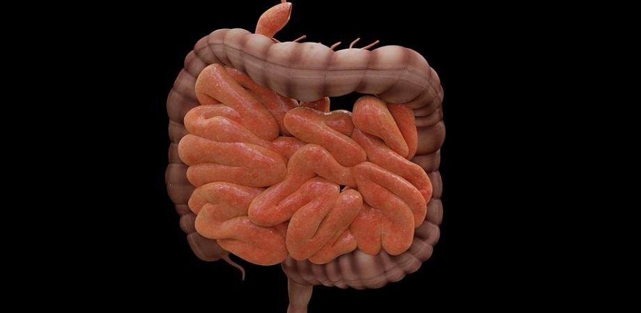 pierde intestinul gras)