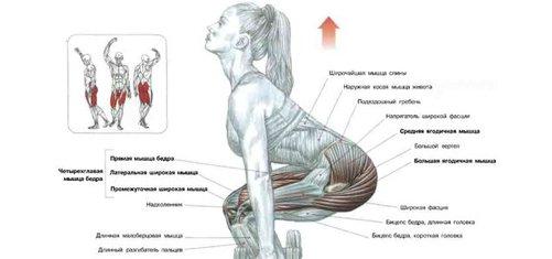 scoate grăsimea din organele interne)