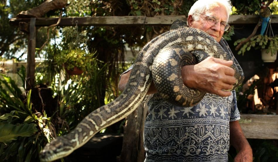 pierde șarpele în greutate)