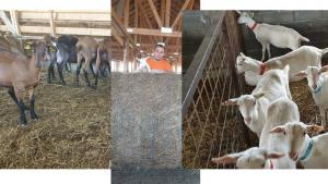 motive de pierdere în greutate la capre)