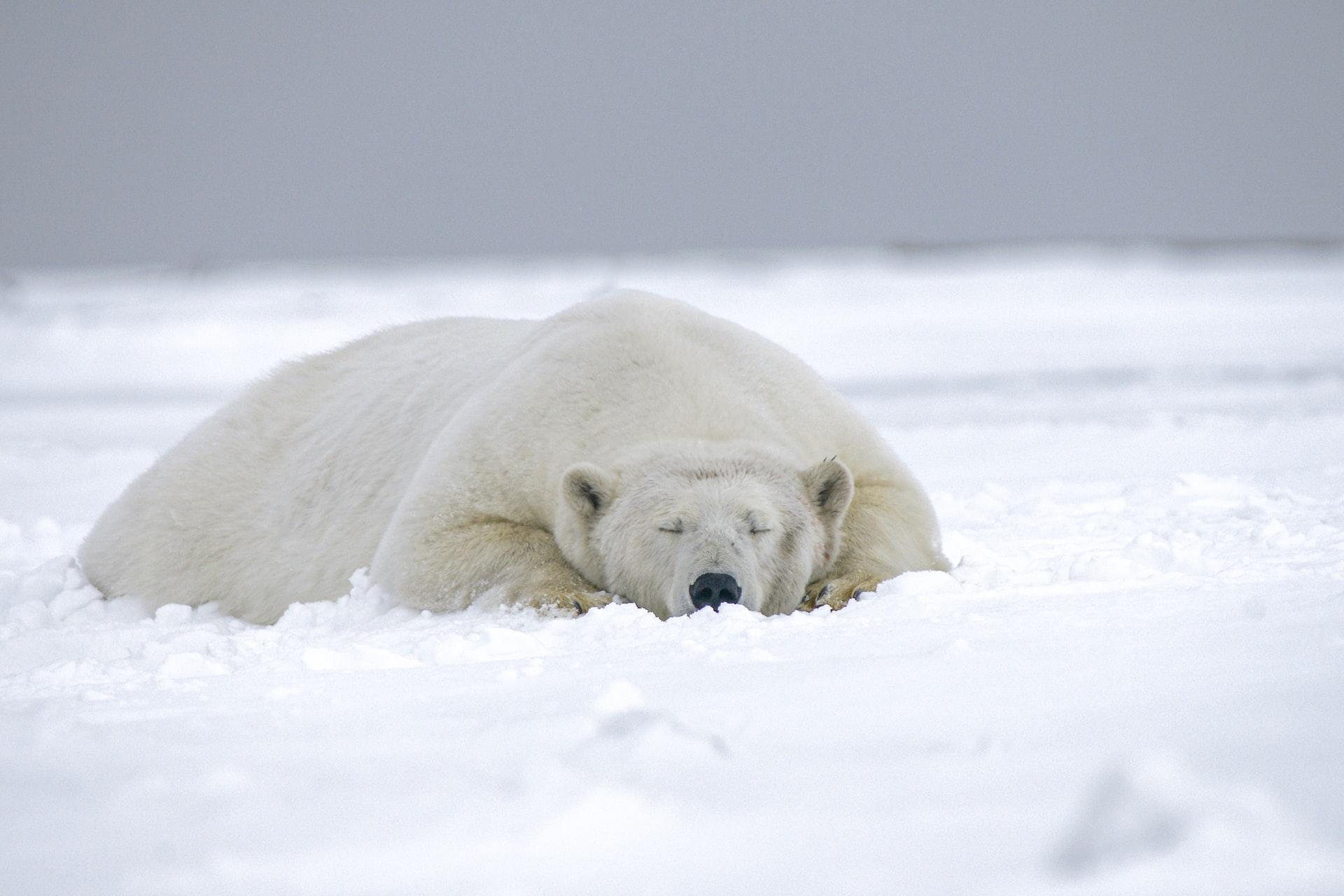 uva ursi pentru pierderea în greutate)