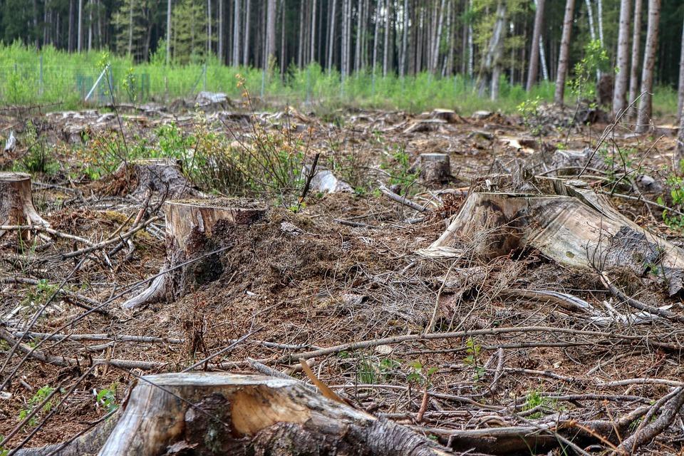 pădurea pierde în greutate)