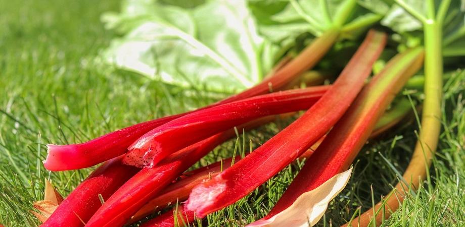 pierderea de grăsimi rhubarb