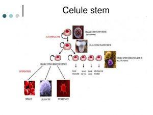 Celulele stem – ce sunt, unde se găsesc, ce rol au? – alegsatraiesc.ro