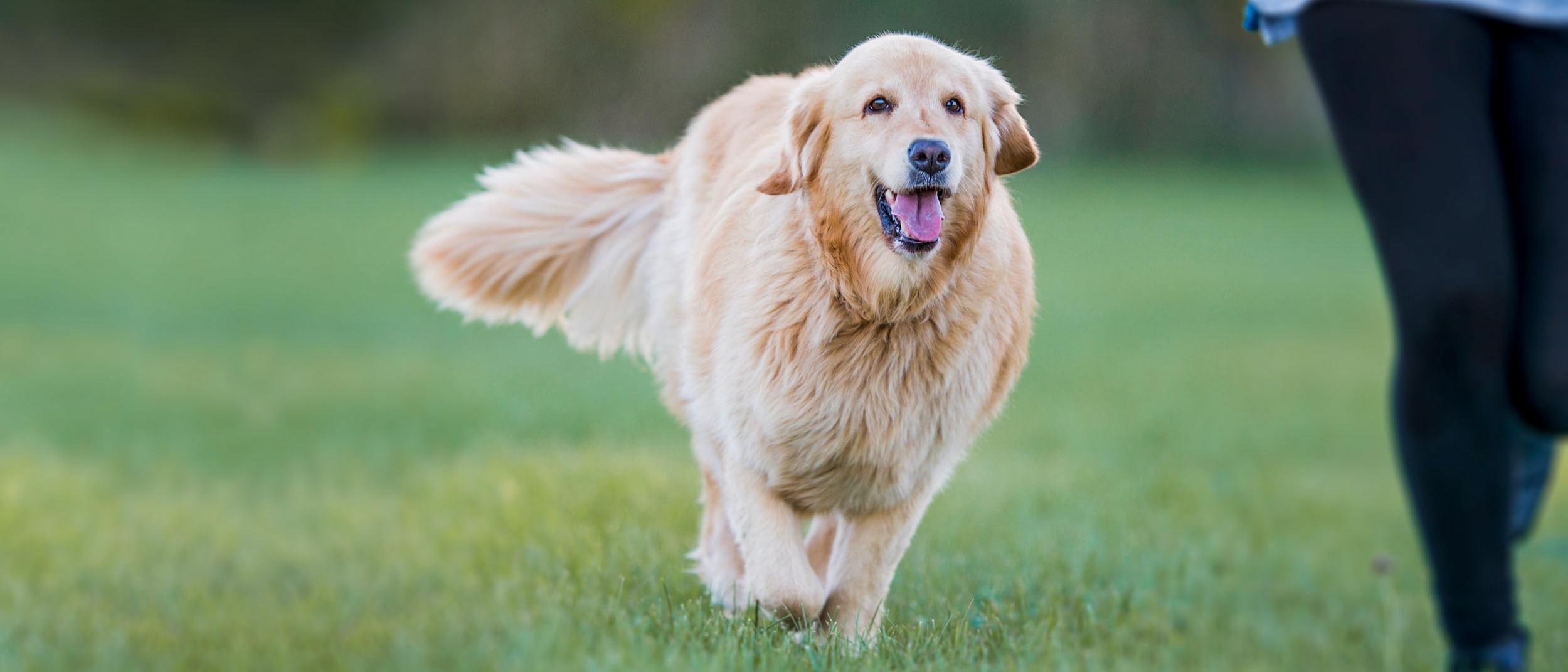poți de pierdere în greutate animale de companie pakka