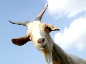pierderea în greutate a chefirului de capră