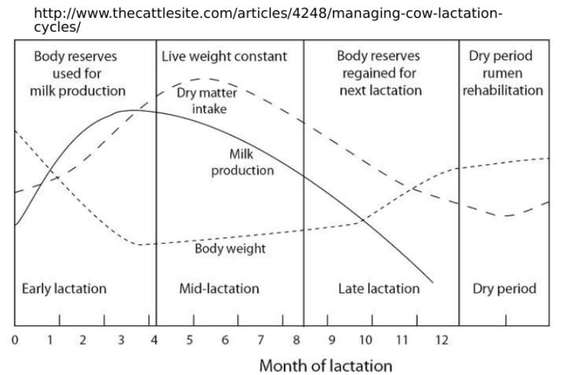 scăderea în greutate a fânului arderea spatelui și a grăsimii laterale