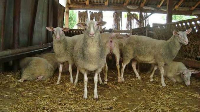 oile pierd în greutate