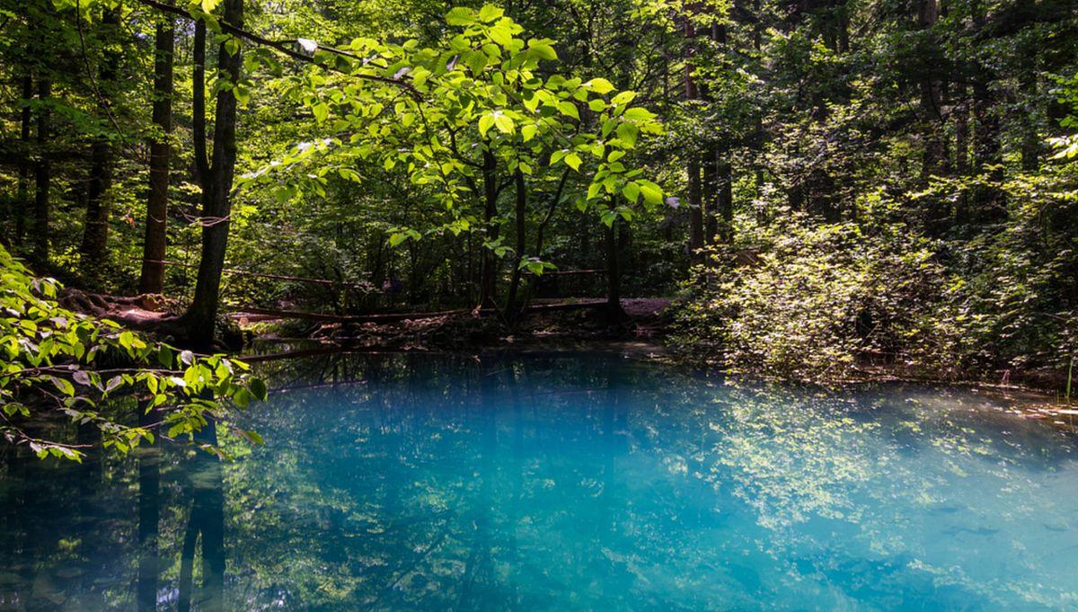 """Cum a furat Primăria Năvodari 2,5 hectare din lacul Siutghiol. Stuful a fost declarat """"pădure"""""""