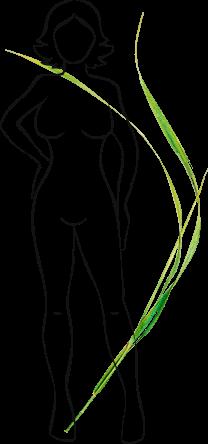 scoate grăsimea din organele interne