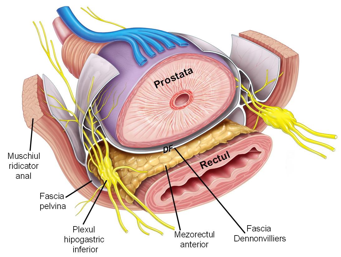 Cerclajul de col uterin