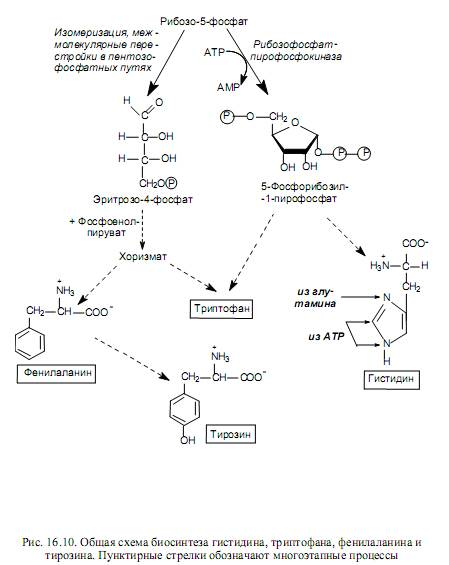 scăderea în greutate a adenosil- 1 metioninei lossra ponderarea