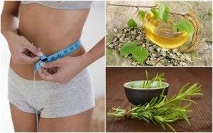 Astragalus ajută la pierderea în greutate)