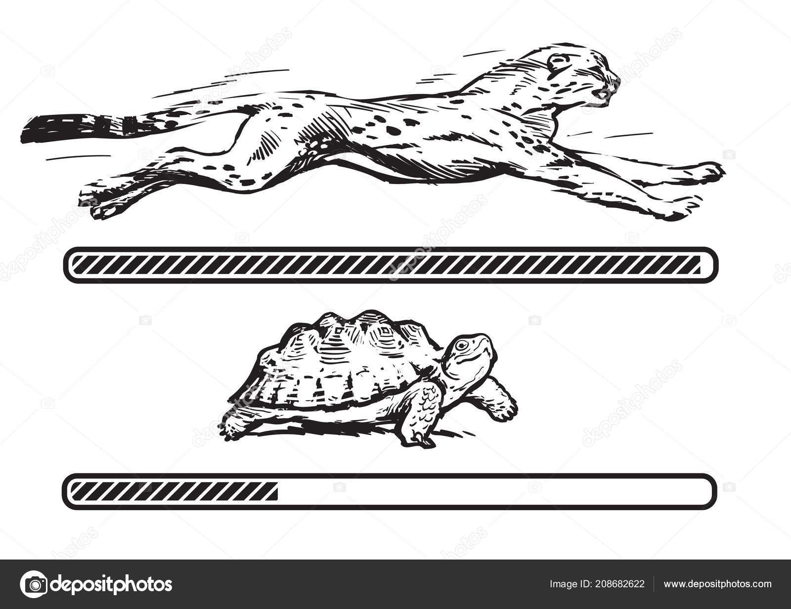 Gecko - ghid de ingrijire (I)