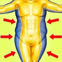 cum să elimini toată grăsimea din corp