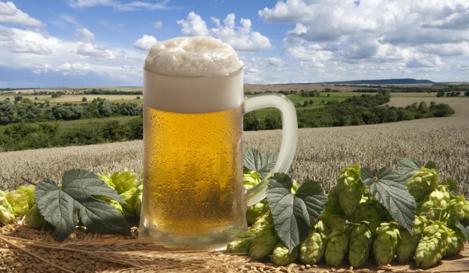 este bere bună pentru pierderea de grăsime