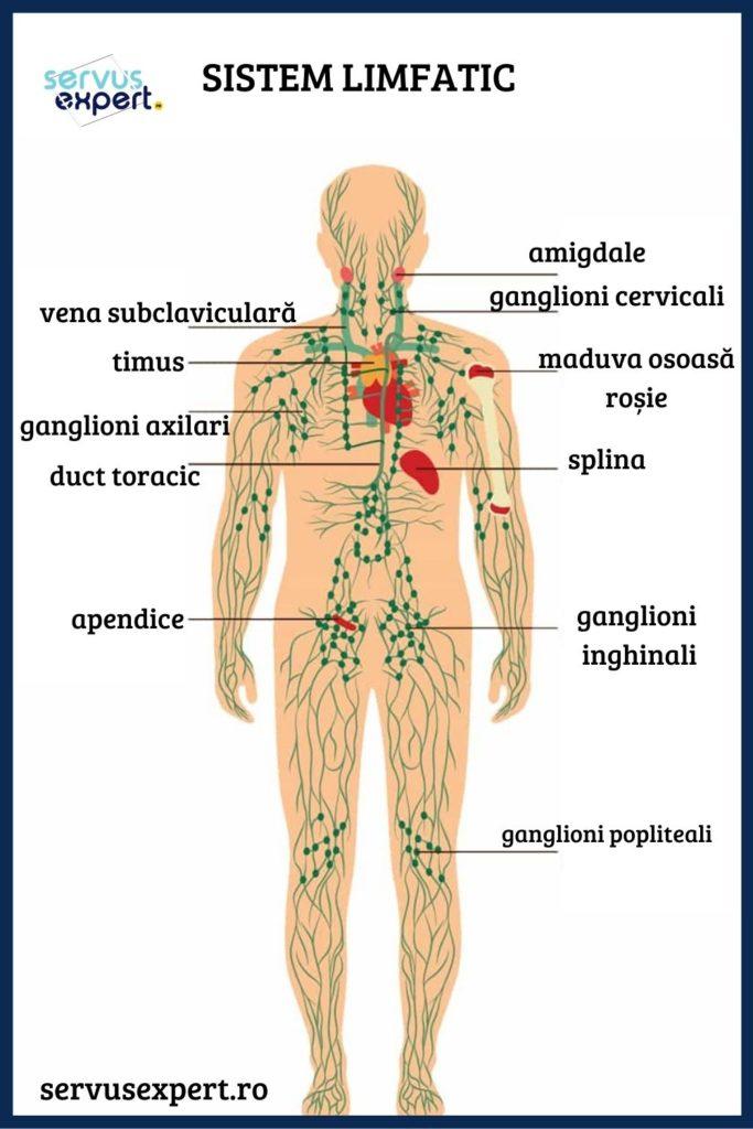 Umflatura axilară | ROmedic