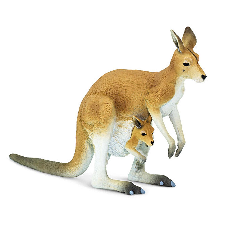 Captivant Kangaroo Fapte