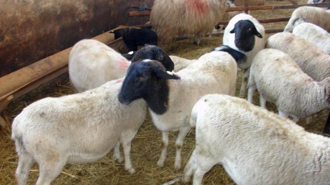 oile pierd în greutate)