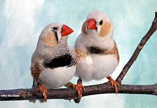 pierderea în greutate pe drumul păsărilor