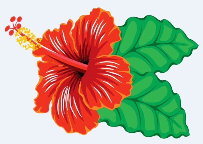 hibiscus sabdariffa pierdere în greutate)