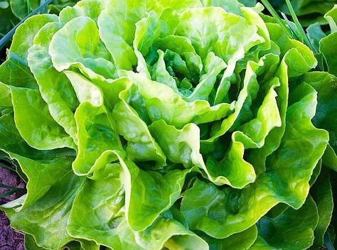 scădere în greutate cu jardineria
