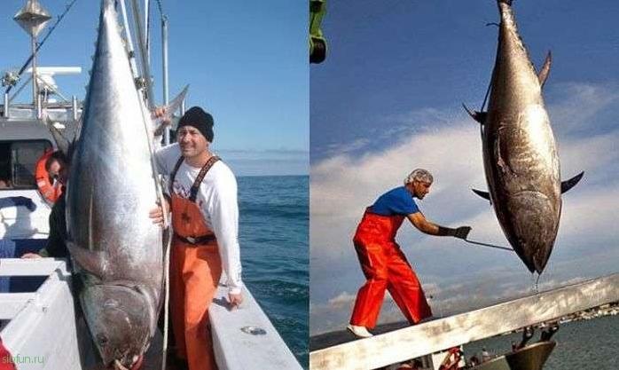 vânători de licitații pierdere în greutate ton