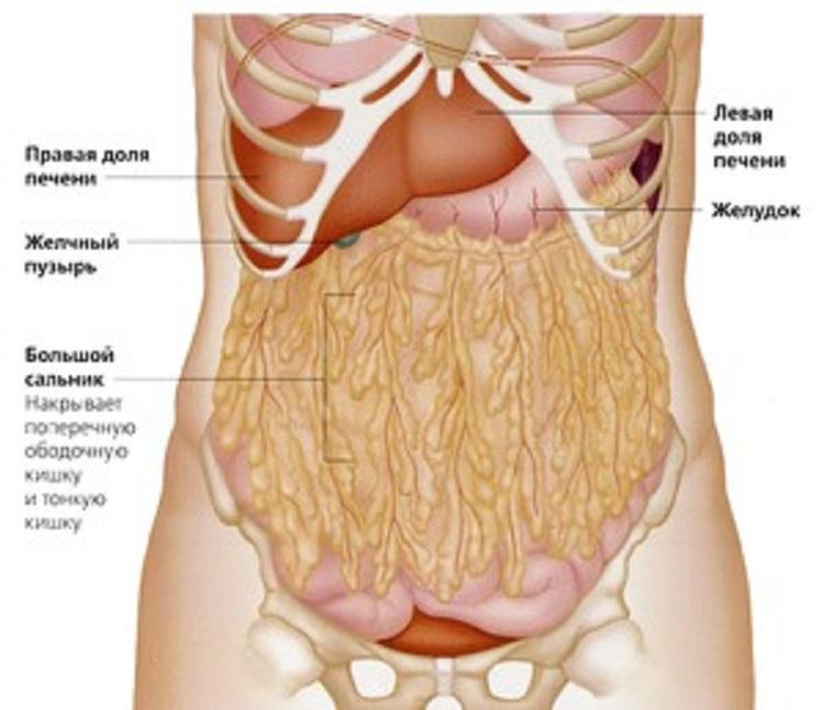 cum să arzi grăsimea organelor interne