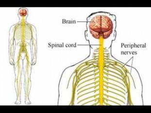 scădere în greutate în scleroza laterală amiotrofică)