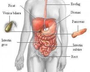 sănătatea corpului subțire