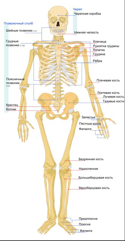Osteoporoză